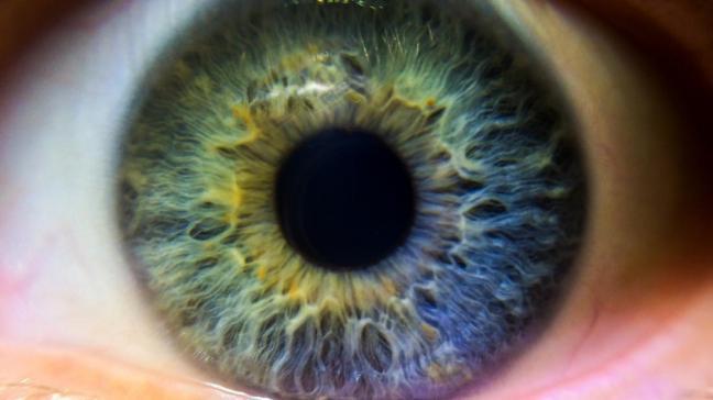 Marrone blu verde e nocciola qual il segreto dietro - Colore degli occhi diversi ...