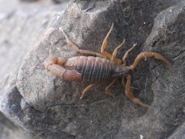 scorpio1