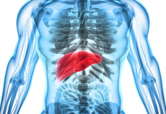 fegato farmajet