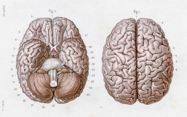 cervello farmajet.jpg