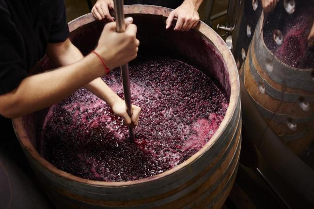 vino resveratrolo